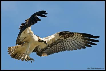 Osprey 2 by AirshowDave