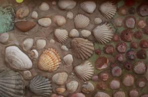 Sea Shells 3 by SpellpearlArts