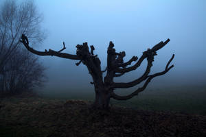 Foggy Landscape 6 by SpellpearlArts
