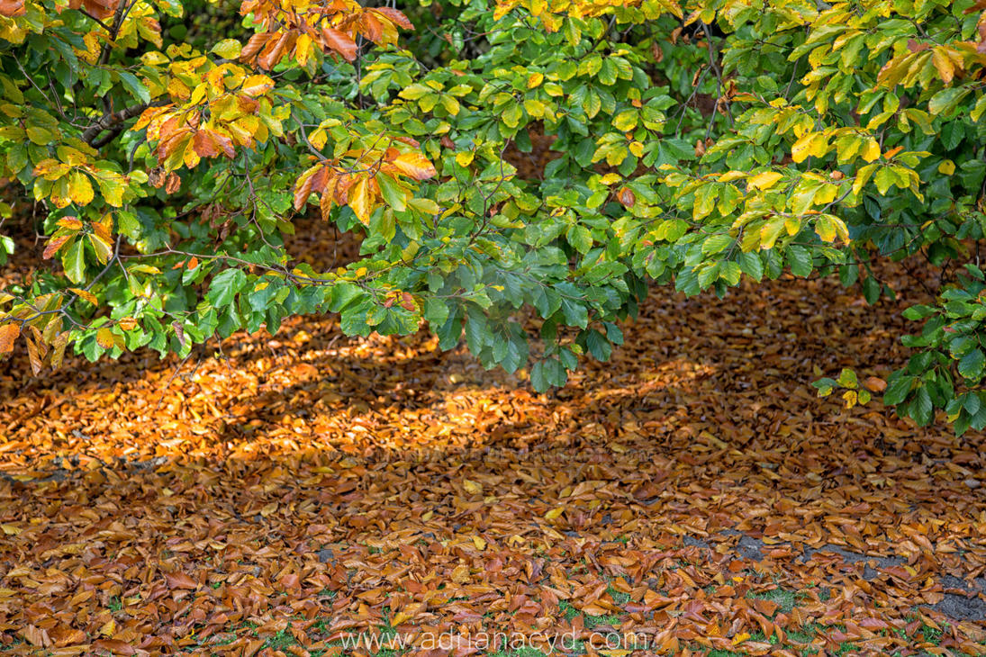 shedding of autumn leaves 14 by Armandacyd