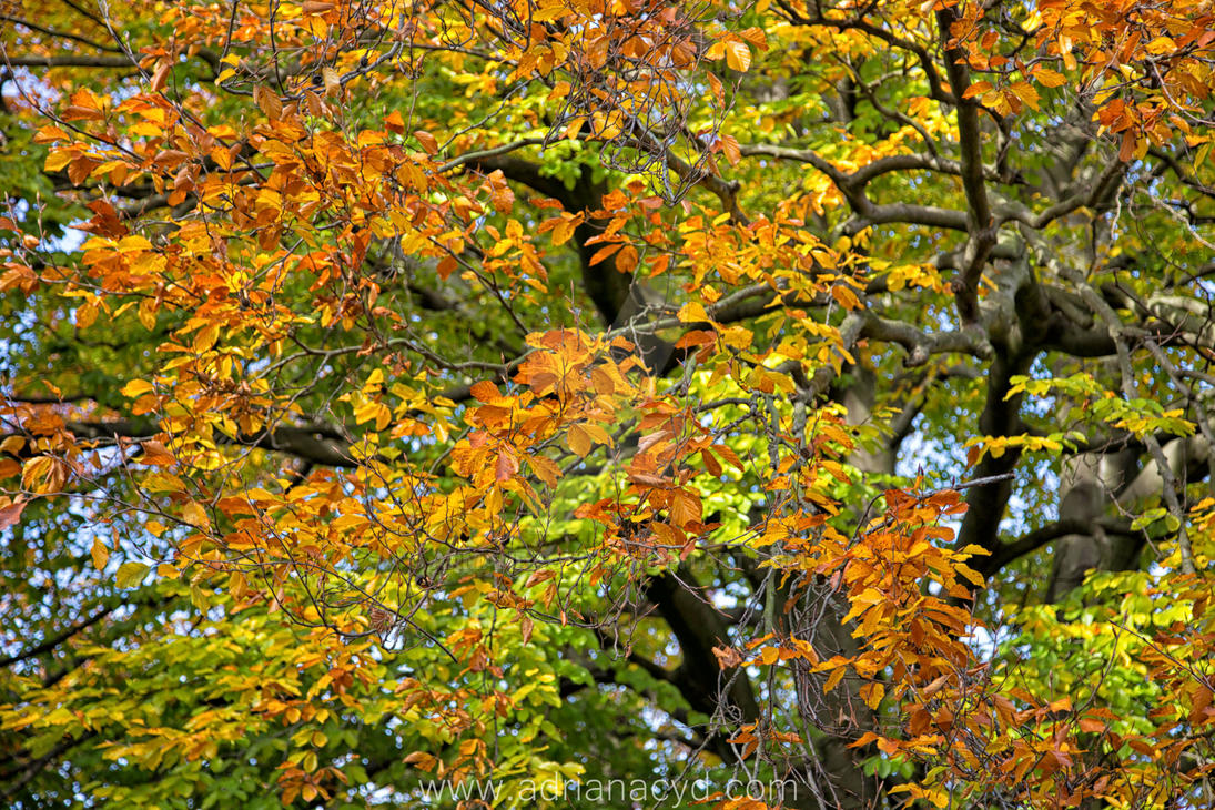 shedding of autumn leaves 15 by Armandacyd