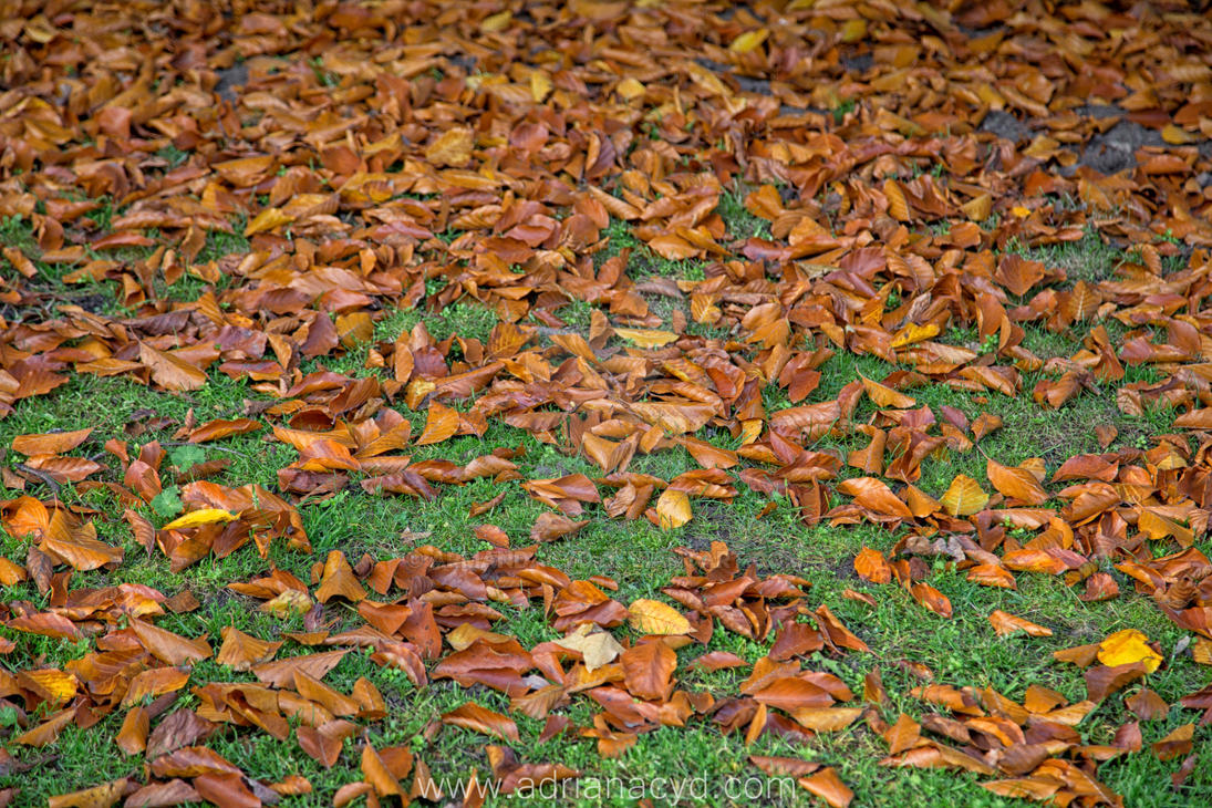 shedding of autumn leaves 16 by Armandacyd