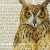 Owl Icon by meow-kyna