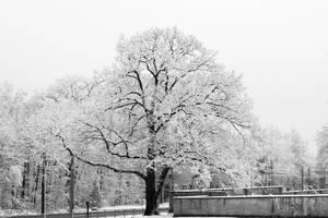 tree of life by alamic-marius