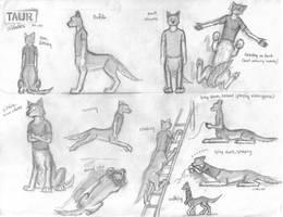 Taur Studies by wannabemustangjockey