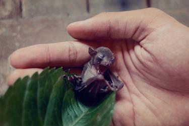 Bat Luck [130/365] by DaphneNg