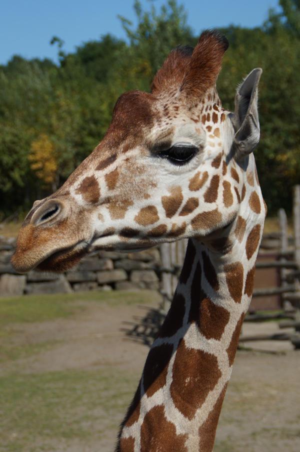 Giraffe by CursedCandy