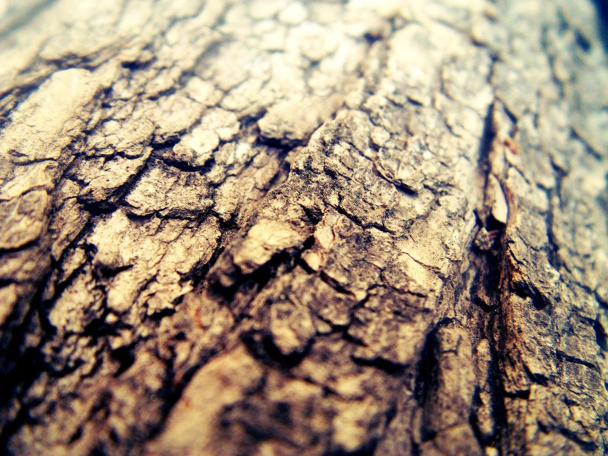 Wood macro by mo0s3