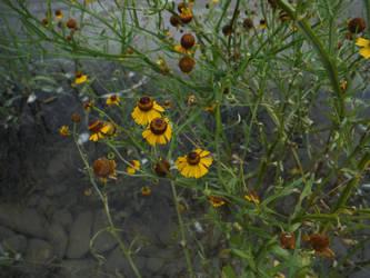 Wild Flowers by Cornsnake88