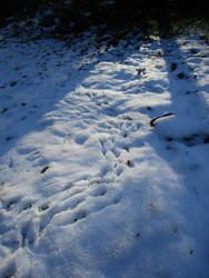 Tracks in the Snow by Taelsa