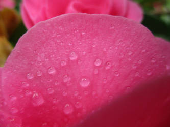 Pink Drops by Taelsa