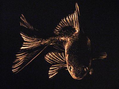 Scratchboard Fish by anti-ignoramus on DeviantArt