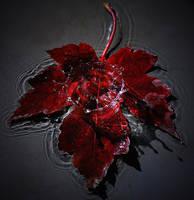 Autumn 2 by JenRoyce