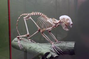 Skeleton Stock 3 by jayjd2 by jayjd2
