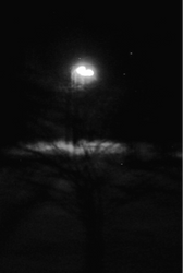 halo of a street lamp
