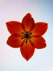 Orange flower by Yeloon