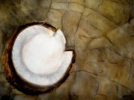 Coconut by nicolepellegrini