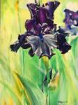 Untitled Iris #3
