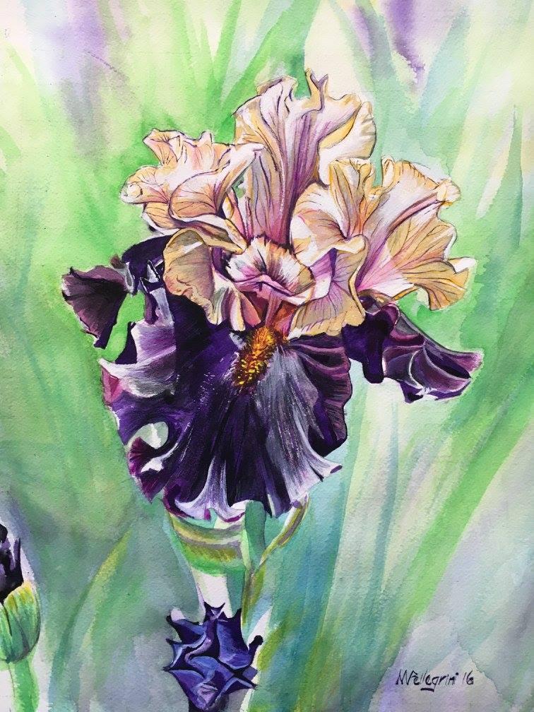 Untitled Iris #12
