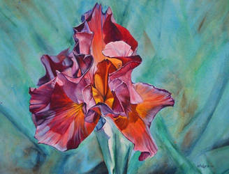 Untitled Iris #5