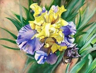 Untitled Iris #7