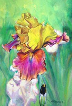 Untitled Iris #8