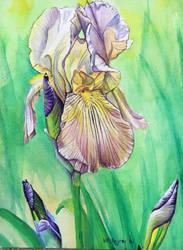Iris9