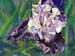 Untitled Iris #10
