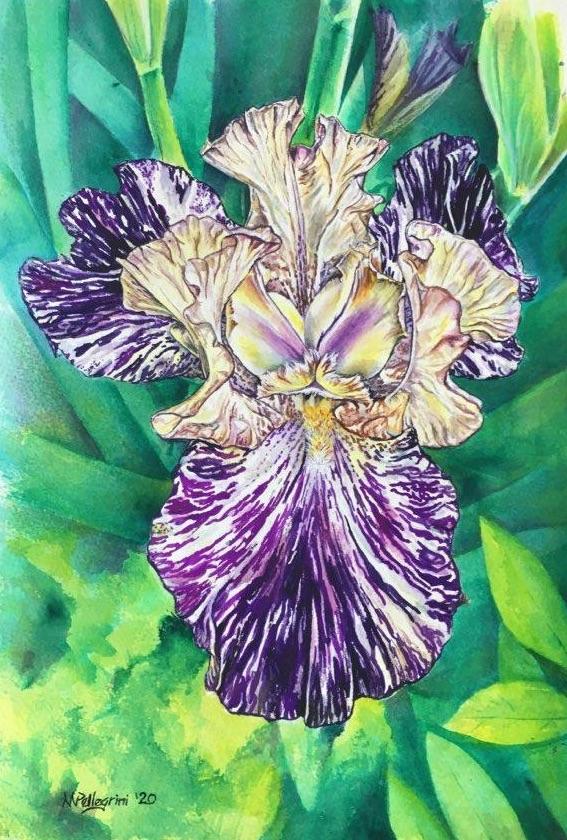 Untitlted Iris #30