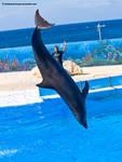 Dolphin Stock 1