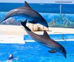 Dolphin Stock 5