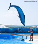 Dolphin Stock 31