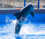 Dolphin Stock 35