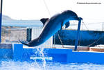 Dolphin Stock 39