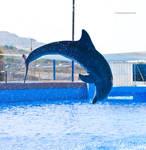 Dolphin Stock 43