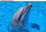 Dolphin Stock 52