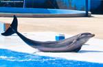 Dolphin Stock 56