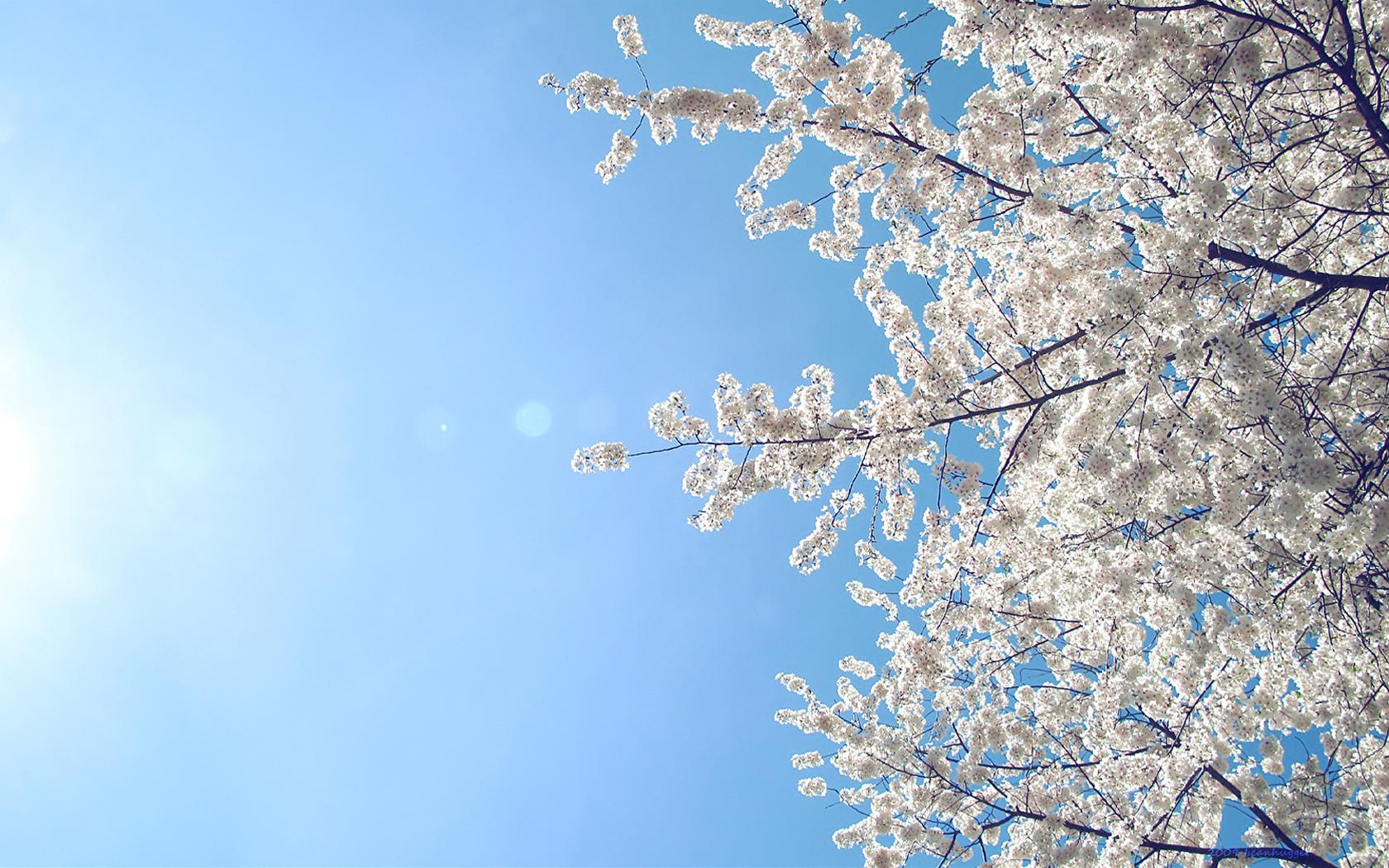 Sweet, Sweet Spring-Borderless by beanhugger