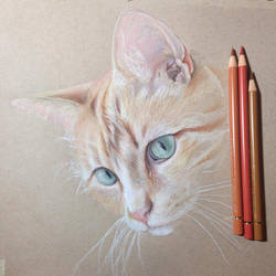 Started a color pencil drawing of my sisters cat
