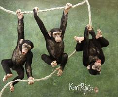 Miniature 1:12 Chimpanzee sculptures by Pajutee