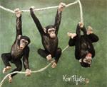 Miniature 1:12 Chimpanzee sculptures