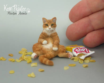 1:12 scale Miniature Cat called Crush
