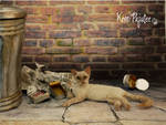 Miniature 1:12 cat sculpture - Wasabi