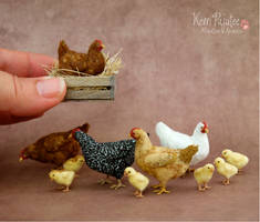Just Some miniature Chickens