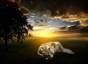 Sleeping Buddies by Elife Genc