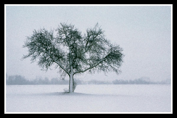 Snow by DreamPhotoFactory