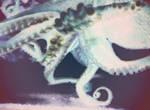 Darling Calamari