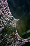 .:SPIDER:.