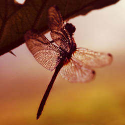 Sleeping Dragonfly by crichton380