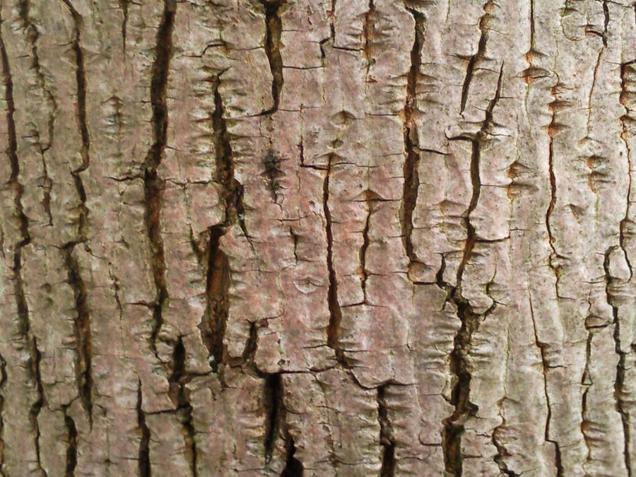 Wood Texture 12 by Fea-Fanuilos-Stock